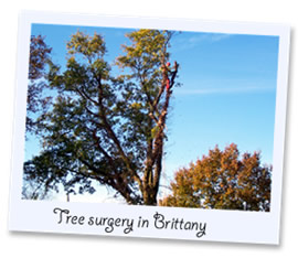 Tree surgeons in Brittany