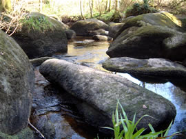 Mossy water worn boulders - Huelgoat forest